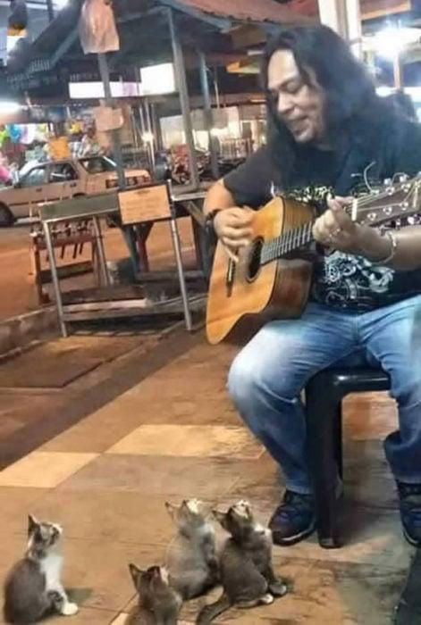 gatitos viendo a un hombre tocar la guitarra