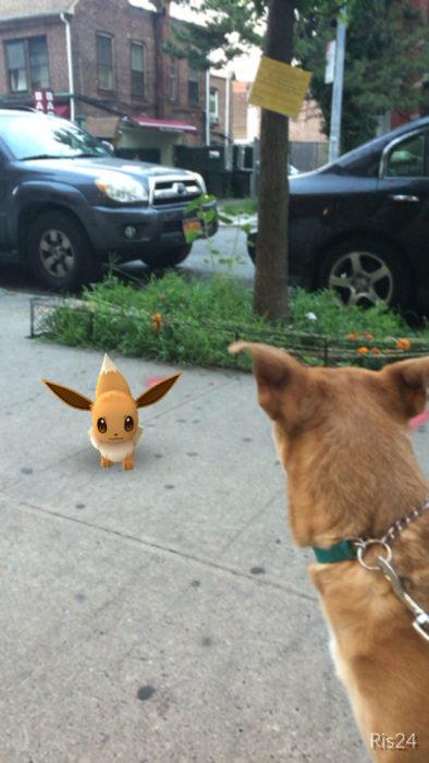 perrito café mirando a un pokémon que parece otro perro café