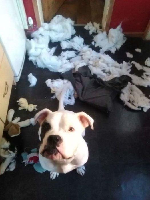 perro hizo un desastre en la casa