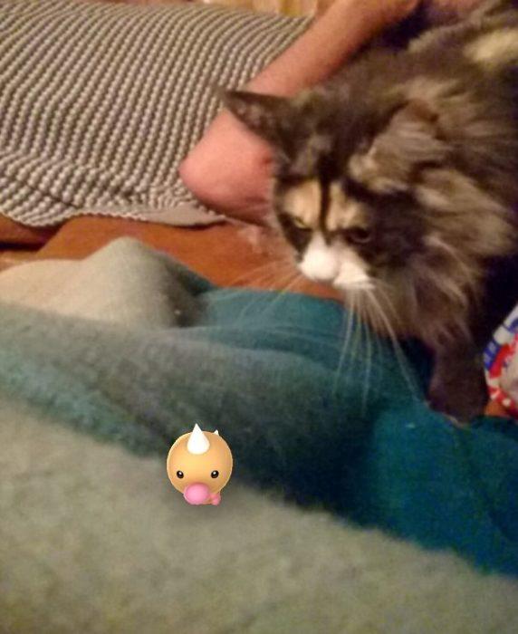 gato mirando con odio a un pokémon