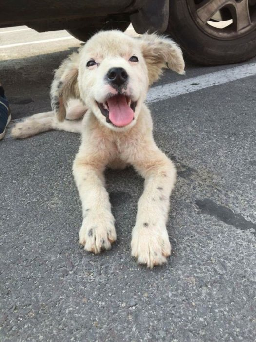 hermoso perrito de la calle