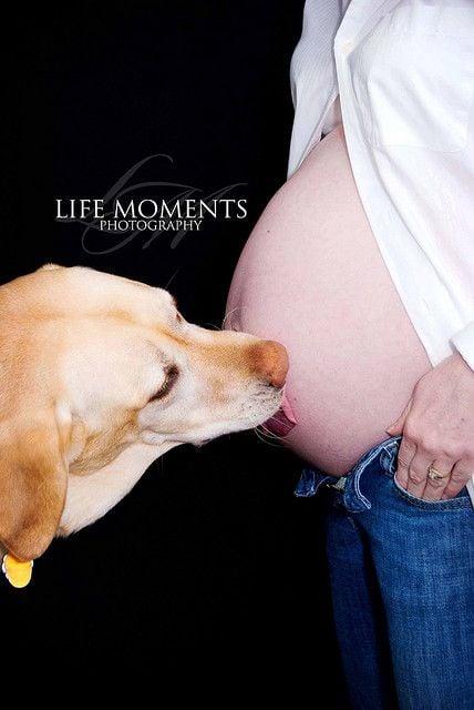 perro lamiendo el vientre de una embarazada