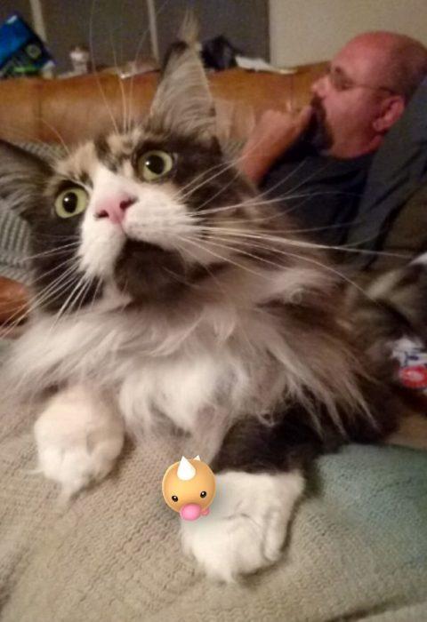 gato sorprendido con pokémon en la mano