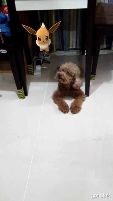 perrito acostado a un lado de un pokémon