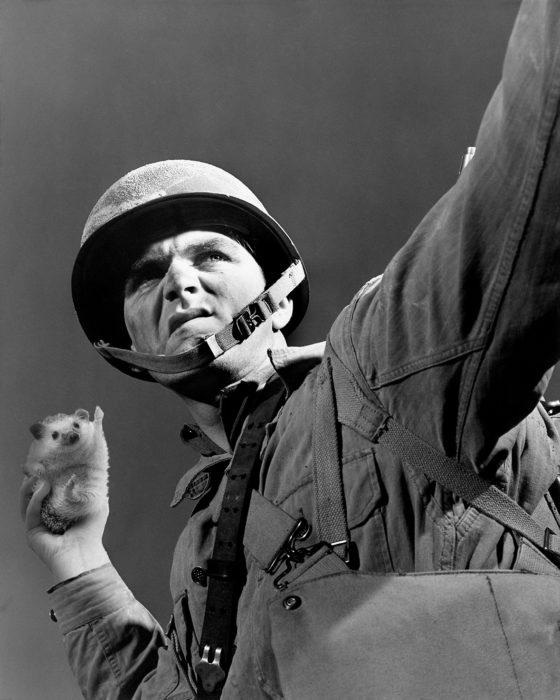soldado sostiene un erizo como si fuera una bomba
