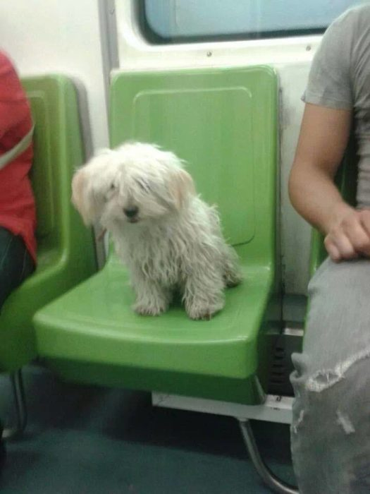 perrito sentado en el metro