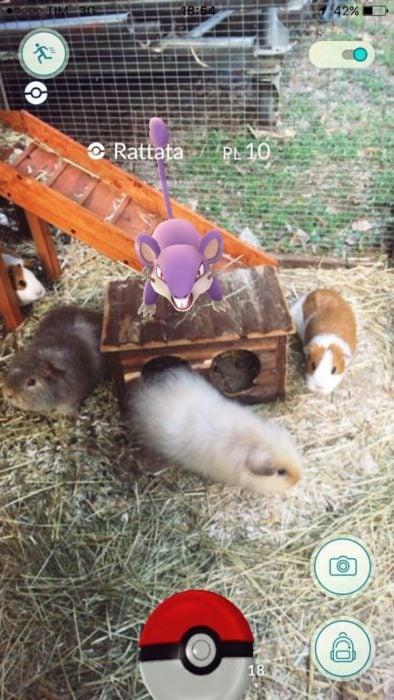 pokémon ratón con hamsters reales