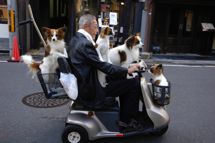 señor en motoneta con perros