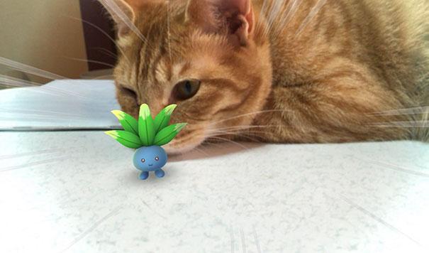 gato olfateando pokémon