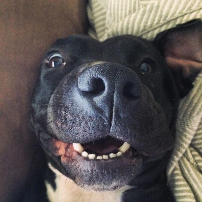 perrito negro sonriendo