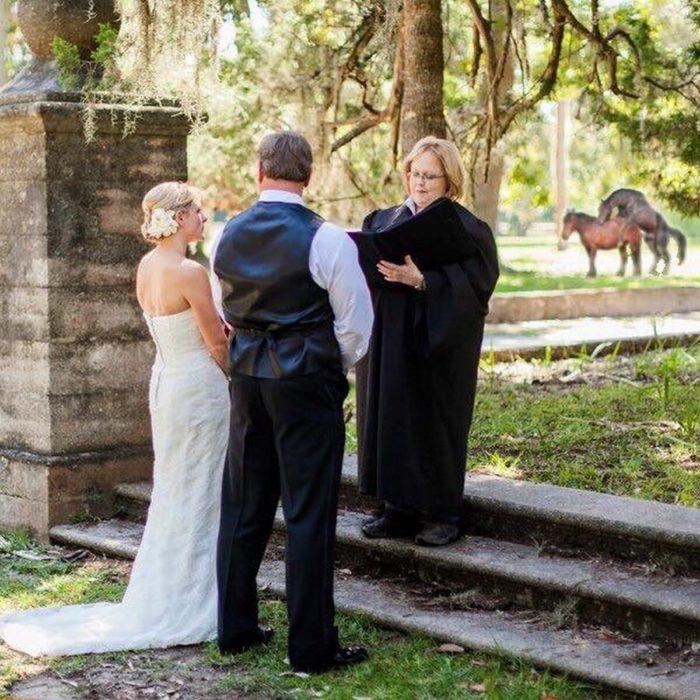 boda caballos en el fondo