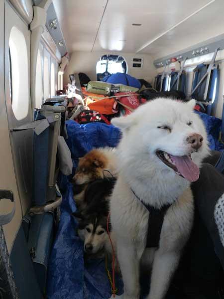 perrito blanco en un avión