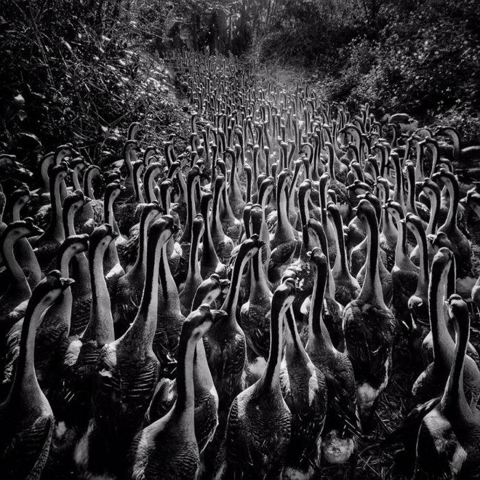 fotografía de aves con iphone