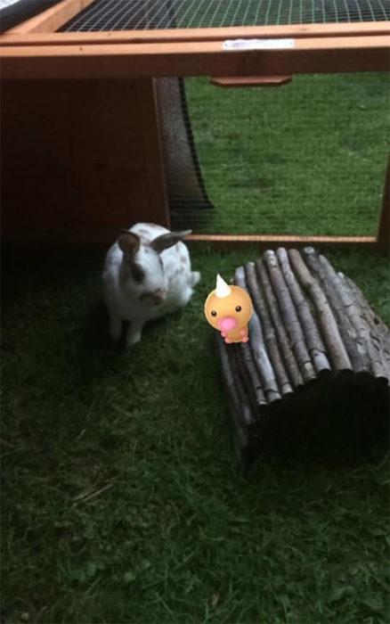 conejo y un pokémon