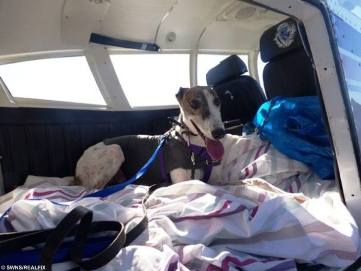 perro acostado en un avión