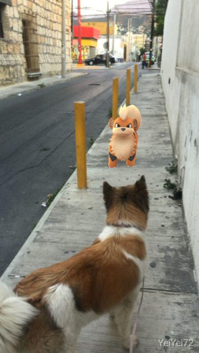 perro frente a un pokémon que parece un perro
