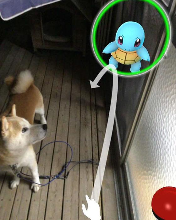perro viendo un pokémon go