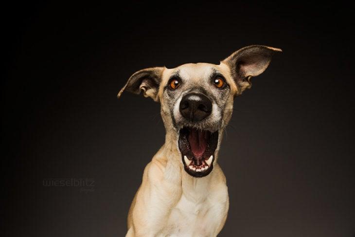 perro con cara de sorprendido