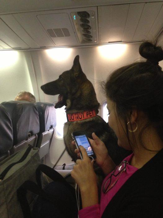 pastor alemán en avión