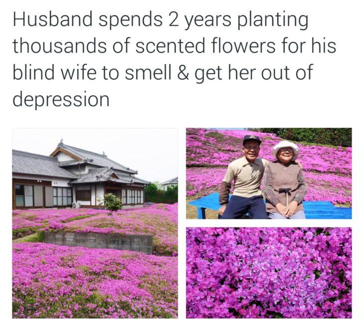 esposo planta miles de flores para su mujer