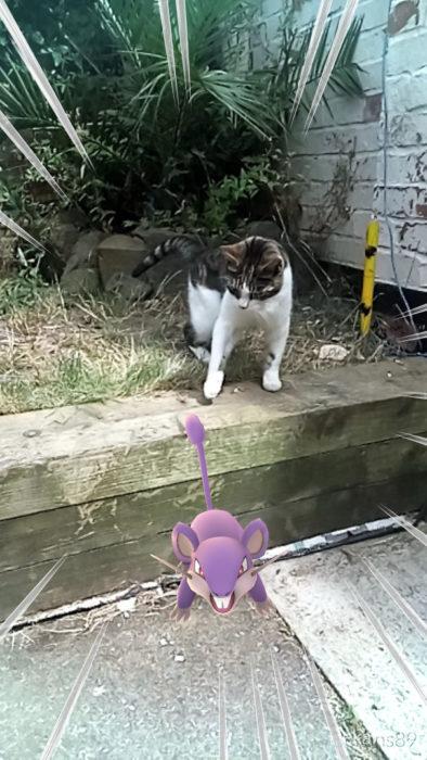 gato y ratón pokémon