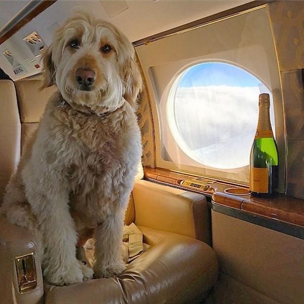 perro rico en un avión