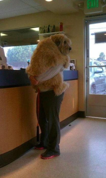 señor cargando un enorme perro