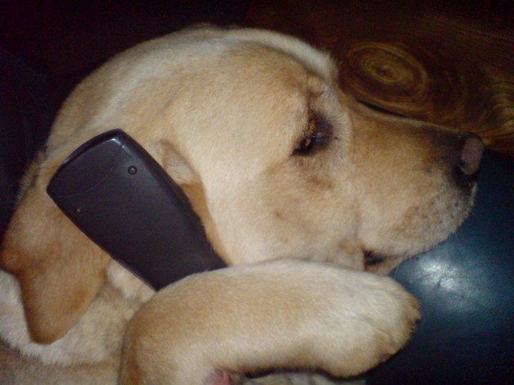 perrito con teléfono