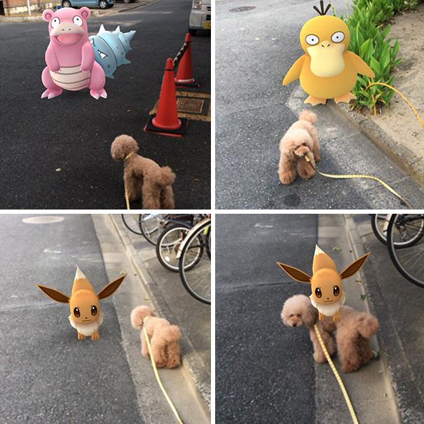 muchas fotos de perrito con pokemones