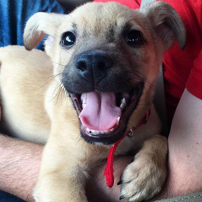 cachorro sonriendo