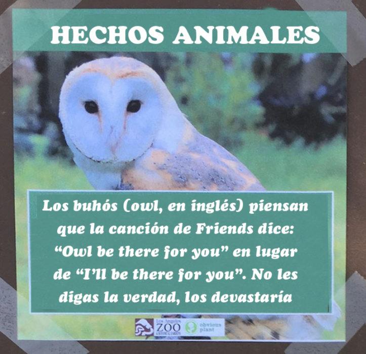 Búho canción Friends hecho animal