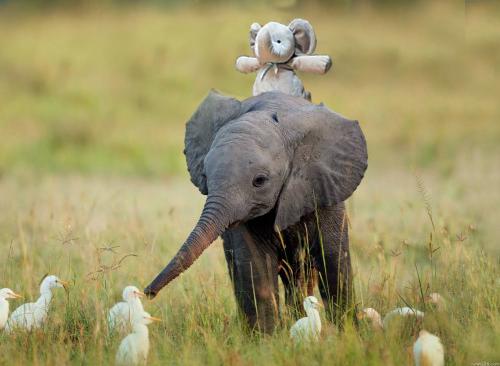 jugando con un elefante y los patos