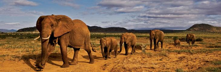 en manada con elefantes