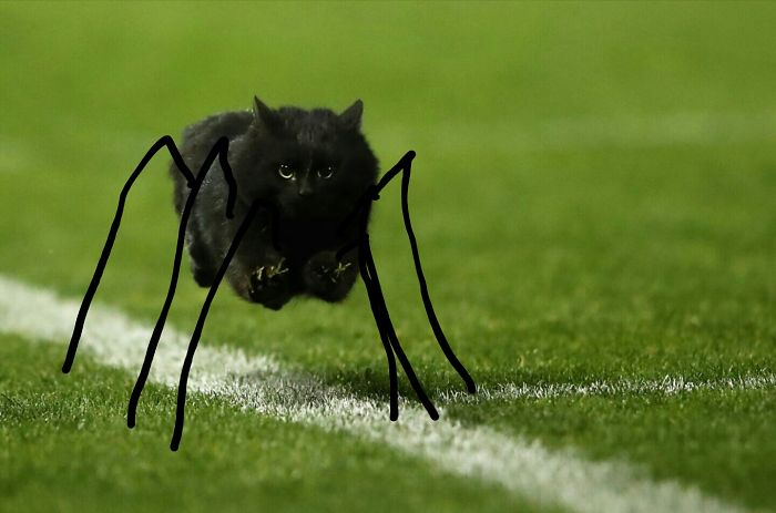 como un gato araña de la relación