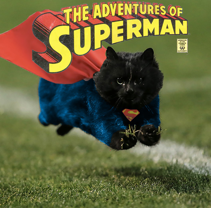 THE ADVENTURES OF THE SUPERCAT