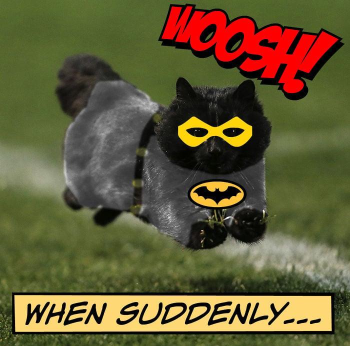gato batman