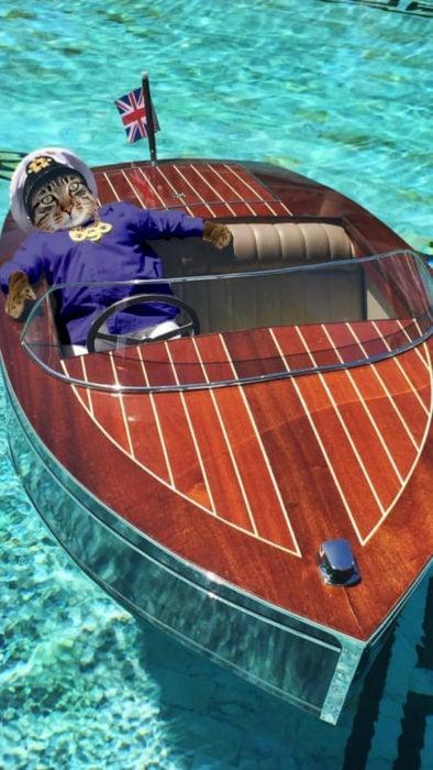 Batalla PS un gato paseandose en un bote