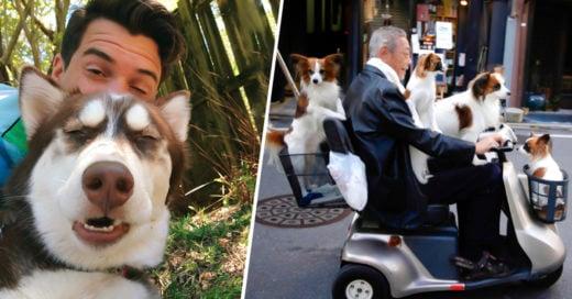 COVER 12 Fotos que todo aquel que adora a los perros entendera