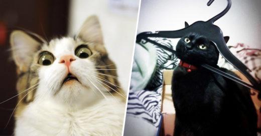 COVER 23 gatos que se arrepintieron de inmediato de sus decisiones