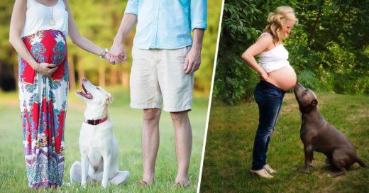 COVER 23 perros que cuentan las horas para que nazcan sus futuros mejores amigos