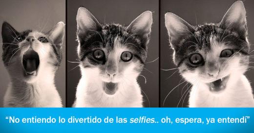 COVER 26 Expresiones invaluables de nuestros gatos y lo que seguramente están pensando