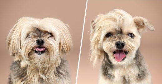 COVER Encantadoras fotografías de perritos que recibieron un cambio de imágen