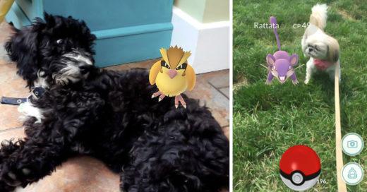 COVER Estas 25 imágenes prueban que las mascotas también pueden ver pokemones