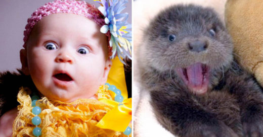 Cover-15-images-that-prove-animals-can-feel-just-as-many-emotions-as-kids-can