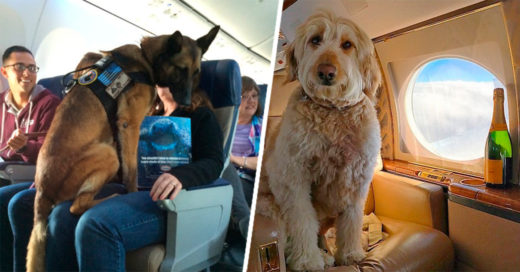 Cover-18-Delightful-Dogs-On-Planes