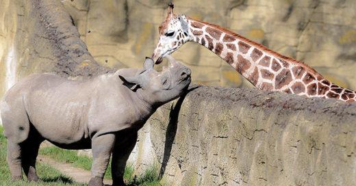 Cover-El-amor-prohibido-de-una-jirafa-y-un-rinoceronte