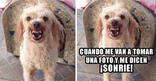 Cover-Luki-la-perra-mas-tierna-y-viral-del-Facebook