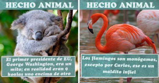 Cover-divertidos-hechos-falsos-de-animales
