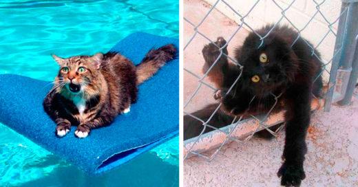 Cover-gatos-majestuosos