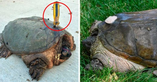 Cover-intentan-matar-a-tortuga